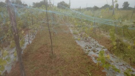Sustainable Natural Farming images 13