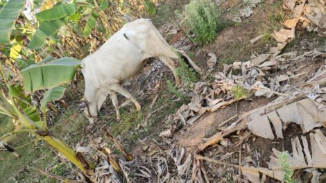 Sustainable Natural Farming images 5